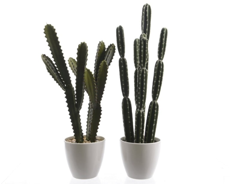 Debenhams Tall Cactus In White Ceramic Pot