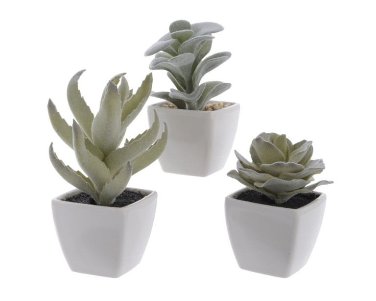 Debenhams Mini Succulent In White Pot